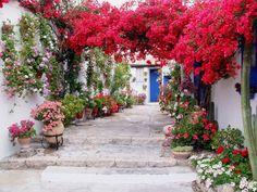 Tendencia Floral…Patios de Córdoba: Floral Trend