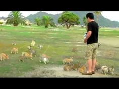 Man feeding rabbits on Okunoshima Island in Japan. Apparently the island is overrun with rabbits.  --This must be what heaven is like :)