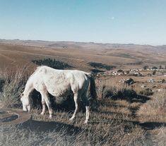 Horses Camel, Horses, Animals, Animales, Animaux, Horse, Animal Memes, Animal, Animais