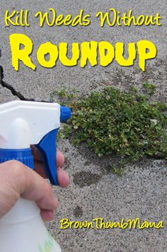 Kill Weeds Naturally Without Roundup: BrownThumbMama.com