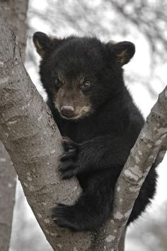 """When you remember everything that happened in 2016. 
