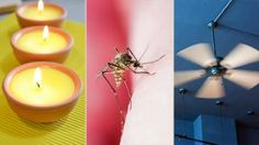 Mosquito bites don't just itch — they can also make you sick. Zap these pesky bumps with these holistic remedies.