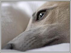 4 Dog Puppy Whippet Greyhound Dogs Puppies by ASLICEINTIME on Etsy, $6.99