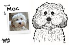 Meet Mac   By Jonathon Chapman from Sketch Your Pet.  Copyright © 2013 Sketch Your Pet. Jonathon Chapman. All rights reserved.