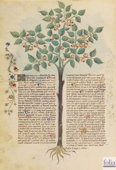 On Plants — Viewer — World Digital Library Voynich Manuscript, Medieval Manuscript, Medieval Art, Illuminated Manuscript, Botanical Drawings, Botanical Illustration, Botanical Prints, Illustration Art, Zentangle