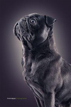 Dog Portraits by Daniel Sadlowski