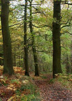 Autumn path by Diane