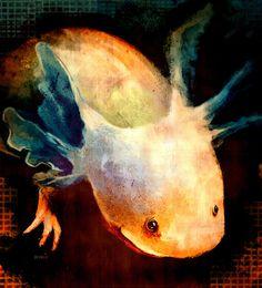 I really want an Axolotl tattoo.