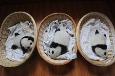 You Need To See These Baby Giant Pandas  #refinery29  http://www.refinery29.com/2015/08/92786/baby-giant-panda-photos#slide-1  Which panda cub is the cutest? Trick question. That's impossible to determine. ...