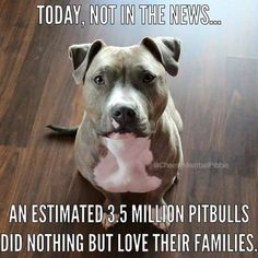 Today, NOT in the news....an estimated 3.5 million pitbulls did nothing but love…