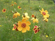 Wildflower | carriewolf.net
