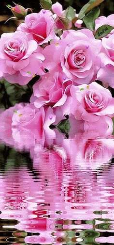 Beautiful. Pink  --  & Reflection  in the Water