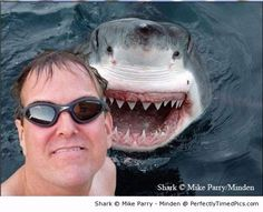 Shark photobomb | Perfectly Timed Pics http://www.perfectlytimedpics.com/pigeon-for-lunch/#.Uy3ZqGco7IU