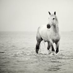 Horse photo - White horse in water, Dreamy NaturePhotography, Animal, Summer, Muted, Sea, Gentle - A Heart So White - Camargue Horse, France