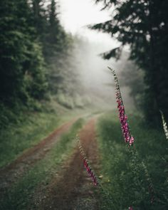 Superb Nature - grace–upon–grace: Dylan Furst Country Life, Country Roads, Landscape Photography, Nature Photography, Travel Photography, Forest Road, Pathways, The Great Outdoors, Mists