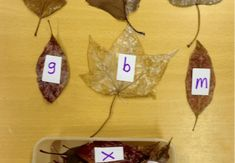 Awesome Autumn activities for EYFS and KS1 - Pobble - Medium