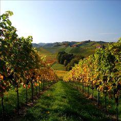 *In Vino Veritas (South Styria) Visit Austria, Wine Photography, California Wine, Beautiful Places, Amazing Places, In Vino Veritas, Planet Earth, Wines, Red Wine