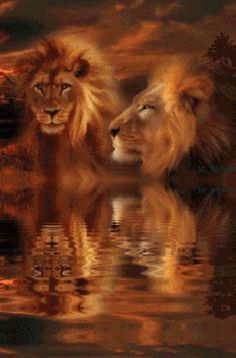 ƸLeoƷ The Mane Attraction Lion Pictures, Pictures To Paint, Beautiful Lion, Animals Beautiful, Big Cats, Cool Cats, Lion Tigre, Lion And Lamb, Gato Gif