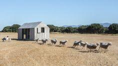 APH80-A con ovejas