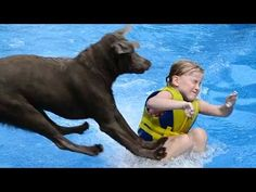 Labradors Are Awesome Compilation : Video Clips From The Coolest One