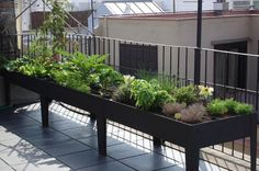 large tiered circular raised bed - Google Search