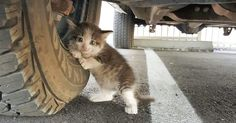 When this good guy saw a scared kitten clinging to a truck near his office, he just couldn't leave her like that. Turns out, the mama kitty ran off... and ditched the kitten. No other kittens could be found.