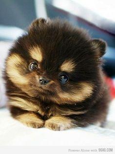 PUPPY!:) so cute