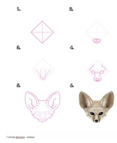 Как рисовать животных: Лисы