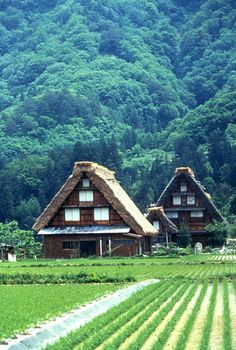 Thatched gassho-zukuri (合掌造り) farmhouses of the historic village, Shirakawa-go (白川郷), in the Gifu Prefecture, Japan