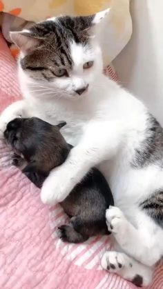 Cute Animal Videos, Cute Animal Pictures, Cute Videos, Funny Cat Videos, Baby Pictures, Funny Memes, Cute Little Animals, Cute Funny Animals, Funny Cats