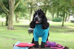 Dog Friendly holidays are getting ever more popular with thousands of us opting to take our beloved pooch travelling with us instead of leaving them in kennels or with friends. There are so many ch…