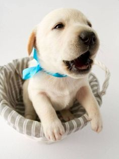 Honey the Lab puppy is so happy with her sweet new Labrador Retriever name that she can't wait to tell the family cat! Here's more naming ideas for this breed>>> http://www.dog-names-and-more.com/Labrador-Retriever-Names.html