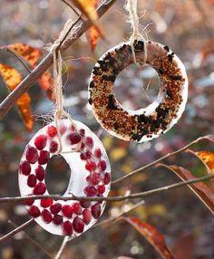 Bird Seed Ice Ornaments