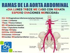 Ramas aorta abdominal