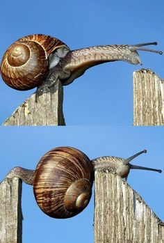 Parkour snail :) Gotta respect that nature has been doing Parkour for centuries