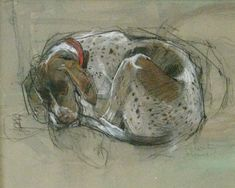 Browse the Felicity House Drawings & Sketchbook gallery. Felicity House is an award winning Dorset-based artist, working primarily in Pastels. Weimaraner, Vizsla, Animal Paintings, Animal Drawings, Dog Drawings, Drawing Animals, Kunst Online, Dachshund, House Drawing