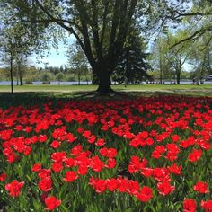 - The Weather Network Weather Network, All Video, Top View, Outdoor Activities, Tulips, Spain, Photo And Video, Plants, Sevilla Spain