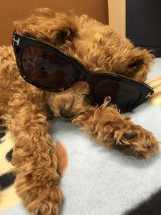 Pino modeling Tom Ford Suns Tom Ford, Eyeglasses, Wayfarer, Lenses, Modeling, Ray Bans, Toms, Animals, Style