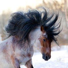 wow! horse, mane