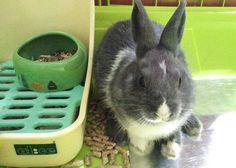 Thinking 🐇 MBR  #rabbit #bunnies #webstapets #rabbitgram #cuteanimals  #dwarfrabbit  #animalgram #netherlanddwarf #rabbitofinstagram #rabbitoftheday #misterbluerabbit #mbr #cuteanimals #photoofday #instarabbit #instagood #pet #petworld #animalphotography #petstagram #babyanimals #cutepetclub #bunnystagram  #kawaii  #instapet #fabbunnies #rabbitworldwide #rabbitstagram @babyanimalshq @babyanmlpage @cutestthingsthereis #babyanimalpets  #animaladdicts