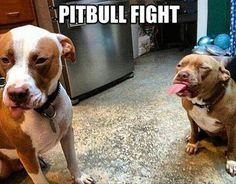 This is what a dog fight SHOULD look like....one dog sticking it's tongue out at the other dog who is pouting in the corner!