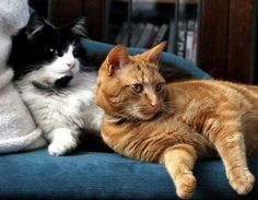 Good Cat offers answers to cat behavior problems from Steve Dale