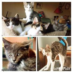 My first foster kitten crew! As Winter nears & the holiday season ramps up, please consider fostering an animal. Too often, the innocent spend these loving times alone.  #adoptdontshop #SaveThemAll #fostercats #pawitforward #thankyou