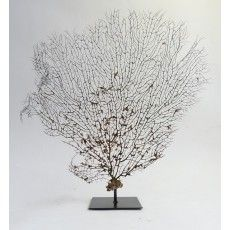 Sea fan, very decorative in your interior. www.demuseumwinkel.com. Webshop for taxidermy, mounte dbutterflies, skulls, skeletons and other interior items
