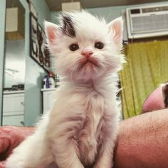 Woman Captures Time-lapse of Her Foster Kitten From Birth to Adoption - Love Meow