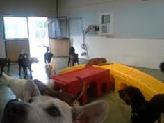 Dog Day Care In Cincinnati Ohio