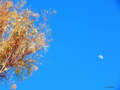 """Ημέρα 3 - """"Φεγγάρι"""" Photographer @Anna Totten Stamataki"""