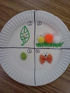 Very Hungry Caterpillar Life Cycle Craft-6#WorldEricCarle#HungryCaterpillar