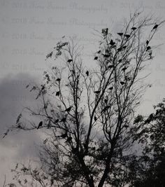 Birds at Rest   8x10 by TimeTurnerPics on Etsy, $7.50
