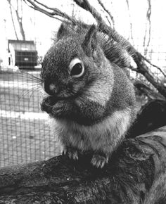 One of our cheeky Hudson squirrels!